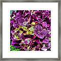 Purple Hortensia After Summer Rain Framed Print