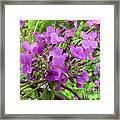 Purple Popping 2 Framed Print