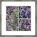 Purple Sage Collage Framed Print
