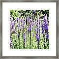 Purple Wild Flowers 2 Framed Print