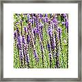 Purple Wild Flowers3 Framed Print