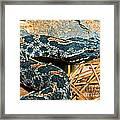 Pygmy Rattlesnake Framed Print