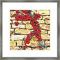 Pyracantha Berries On Stone Wall Framed Print