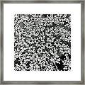 Queen Anne's Lace In Black And White Framed Print
