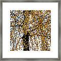 Quiet Charm Of Autumn Framed Print