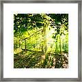 Radiant Sunlight Through The Trees Framed Print