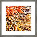 Rainbow Roots Framed Print