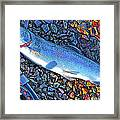 Rainbow Trout Dry Fly Reel Poster Image Framed Print by A Gurmankin