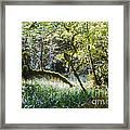 Rainforest Landscape Framed Print