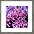 Rainy Day Flowers Framed Print