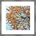 Reaching Autumn Framed Print