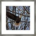 Ready For A Landing Framed Print