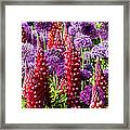 Red And Purple #1 Framed Print