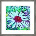 Red And White Flower Framed Print