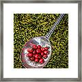 Red Berries Silver Spoon Moss Framed Print