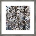 Red Bird On Snow Covered Limb Framed Print