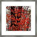 Red Blaze Burst Framed Print