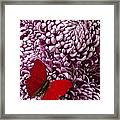 Red Butterfly On Red Mum Framed Print