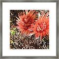Red Cactus Framed Print