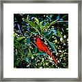 Red Cardinal 1 Framed Print