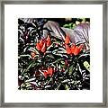 Red Chili Peppers Framed Print