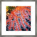 Red Coral Framed Print by Roberto Galli della Loggia