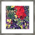Red Geranium With Yellow And Purple Flowers - Horizontal Framed Print