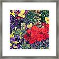 Red Geranium With Yellow And Purple Flowers - Vertical Framed Print