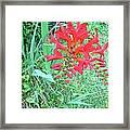 Red Gift Framed Print