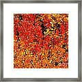 Red-golden Alpine Shrubs Framed Print