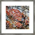 Red Growth Rock Framed Print