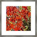 Red Leaves 1 Framed Print