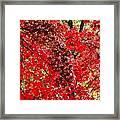 Red Leaves 3 Framed Print