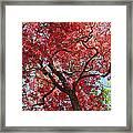 Red Leaves On Tree Framed Print