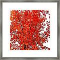 Red Lights Framed Print