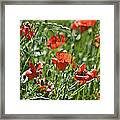 Red Oats Framed Print by Teresa Dixon