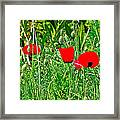 Red Poppies Near Meryem Ana Evi-cottage Believed To Be Mary's Last Home-turkey Framed Print
