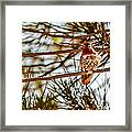 Red Rock Country Hummingbird Framed Print