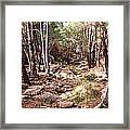 Red Rock Pine Forest Framed Print