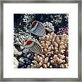 Red Sea Beauty 5 Framed Print