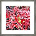 Red Spider Lily Flower Painting Framed Print