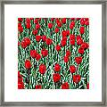 Red Spring Framed Print