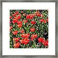 Red Tulip Bed Framed Print