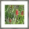 Redblossom Framed Print