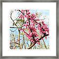 Redbud Buds Framed Print by Debbie Sikes