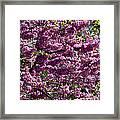 Redbud Tree In Blossom Framed Print