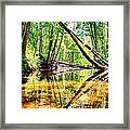 Reflected Forests Framed Print