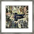 Reflection Of A Wood Duck Framed Print