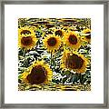 Reflections Of Sunflowers Framed Print