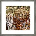 Reflections On A Forest Floor Framed Print